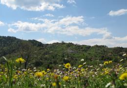 spring time dichouni